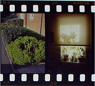 Portion of slidestrip taken with Fujica Drive